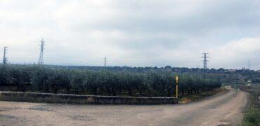 Finca 1955m2 en Albelda de Iregua, con plantación de olivos