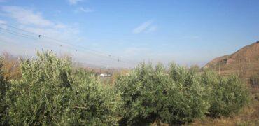 Finca en Albelda de Iregua con olivos de 2204 m2 (La Raposa)